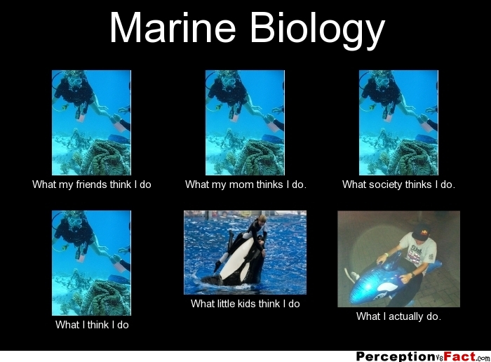 Marine Biology... - What people think I do, what I really ...