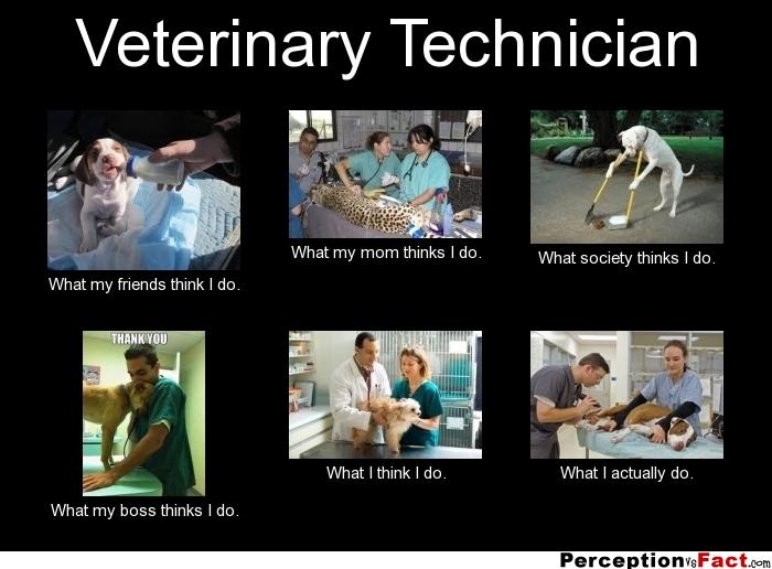 Vet Tech Quotes Amazing Veterinary Technician Quotes